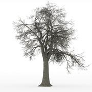 ash tree leafless in 100mpix - stock photo