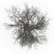 ash tree top leafless in 100mpix - stock photo