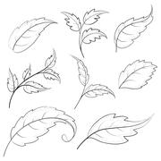 Leaves, contours Stock Illustration
