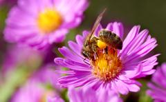 Noney bee and pollination - stock photo