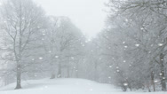 Stock Video Footage of Ethereal winter landscape with falling snow