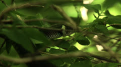 Snake in three Stock Footage