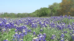 Bluebonnets RGT to LFT Stock Footage