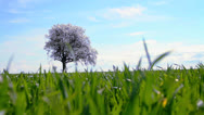 Stock Video Footage of Lonely Spring Garden Tree on Green Grass Field - HD Background