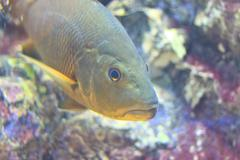 fish  in the aquarium of rayong province,thailand - stock photo