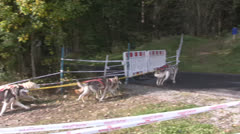 Dog Sledding in summer Stock Footage
