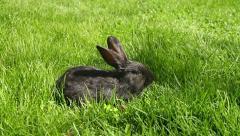 Bunny Rabbit on Spring Grass HD Stock Footage