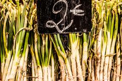 A neat row of spring onions bundled for sale at the market. Stock Photos