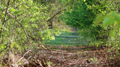 Nature trail with blue jay bird Stock Footage