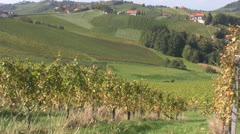 Autumn Vineyards Stock Footage