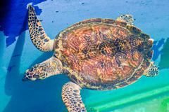 Sea turtles in the aquarium of rayong province,thailand Stock Photos