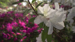 Springtime (flowers) - stock footage