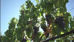 Nappa Valley Vineyard Video Collection Stock Footage