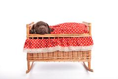 Stock Photo of puppy in a crib