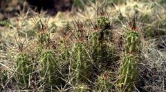 cactus2 - stock footage
