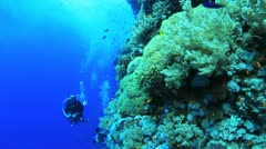 anemone city with diver in the back ground - stock footage