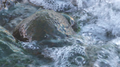 Close up of a slimy rock - stock footage