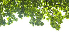 Green leaves on white background , frame Stock Photos