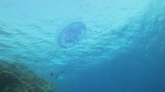 Stock Video Footage of jelly fish swims in the blue water