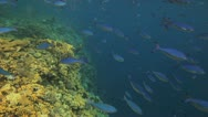 Stock Video Footage of big shoal of fish swimming near the reef