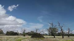 Dead trees Stock Footage