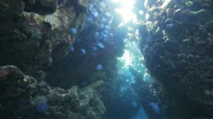 Stock Video Footage of large number of Jelly fish inside colorful cave under the sun light