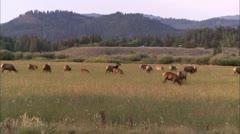 gtnp elk. - stock footage