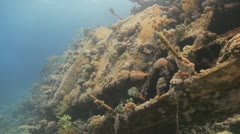 Coral growth over the ship wreck Stock Footage