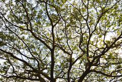 branches of the tree, background and texture - stock photo