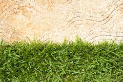 Fresh green grass on cement background Stock Photos