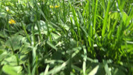 Stock Video Footage of POV Walking, Passing, Stepping, Running in Grass, Meadow, Flower Field, Footstep