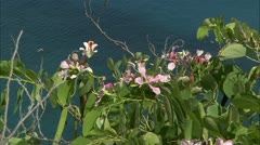 Guana flower6 Stock Footage