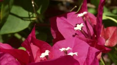 Greene hd guana flower8 Stock Footage
