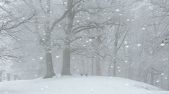 Pristine white snowfall in a winter park Stock Footage