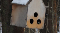 Birdie a titmouse in a nesting box Stock Footage