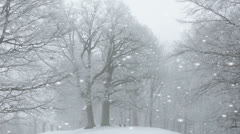 Leafless trees in a winter snowstorm Stock Footage