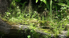 Jungle scene close up with tropic butterflies Stock Footage