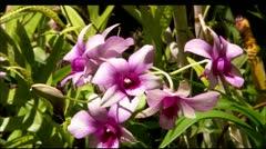 Hwi flower8 Stock Footage