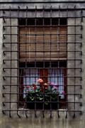 Stock Photo of grate  and flowers