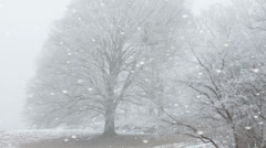 Ethereal winter landscape in falling snow Stock Footage
