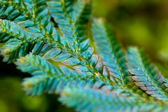 Fern leaf with dew water drops Stock Photos