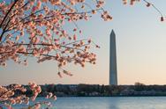 Cherry Blossom Sunrise In Washington DC Stock Photos