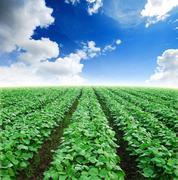 Field agiculture green grass blue sky Stock Photos