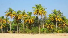 Coconut palms under blue sky Stock Footage