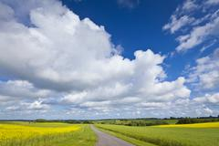 Oilseed rape, canola, biodiesel crop Stock Photos