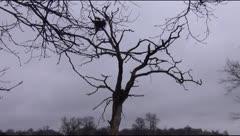 Stork nest in April Stock Footage