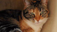 Cute Cat moves her head Stock Footage