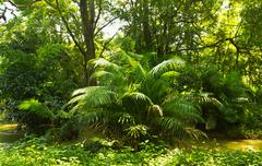 Tropical rainforest jungle Stock Photos