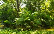 Stock Photo of tropical rainforest jungle