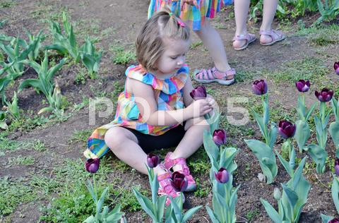 Stock photo of Girl Smelling a Flower at Washington DC Garden
